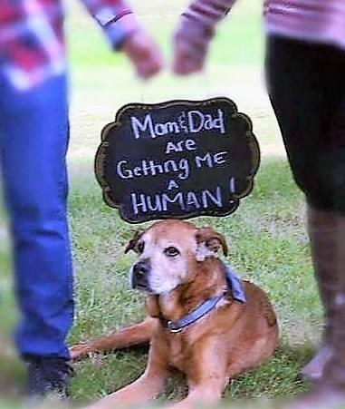 Senior dog helps his parents announce they're expecting a baby