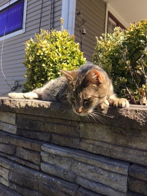 woman finds missing cat through Facebook after two and a half years