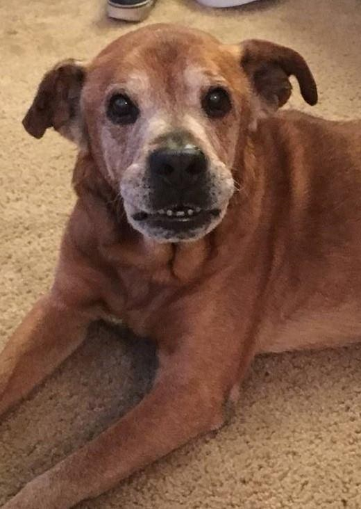 Senior dog saved from shelter in Maryland