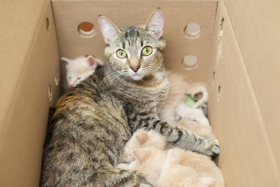 Mama cat with her adopted kittens