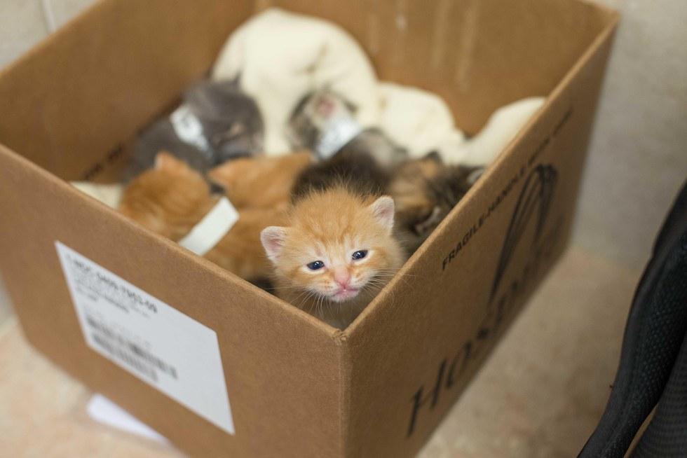 Litter of tiny kittens