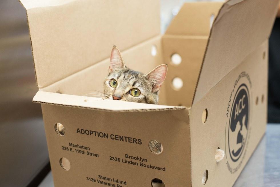 Mama cat in a cardboard box