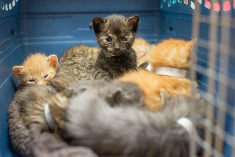 A litter of kittens in a cat carrier