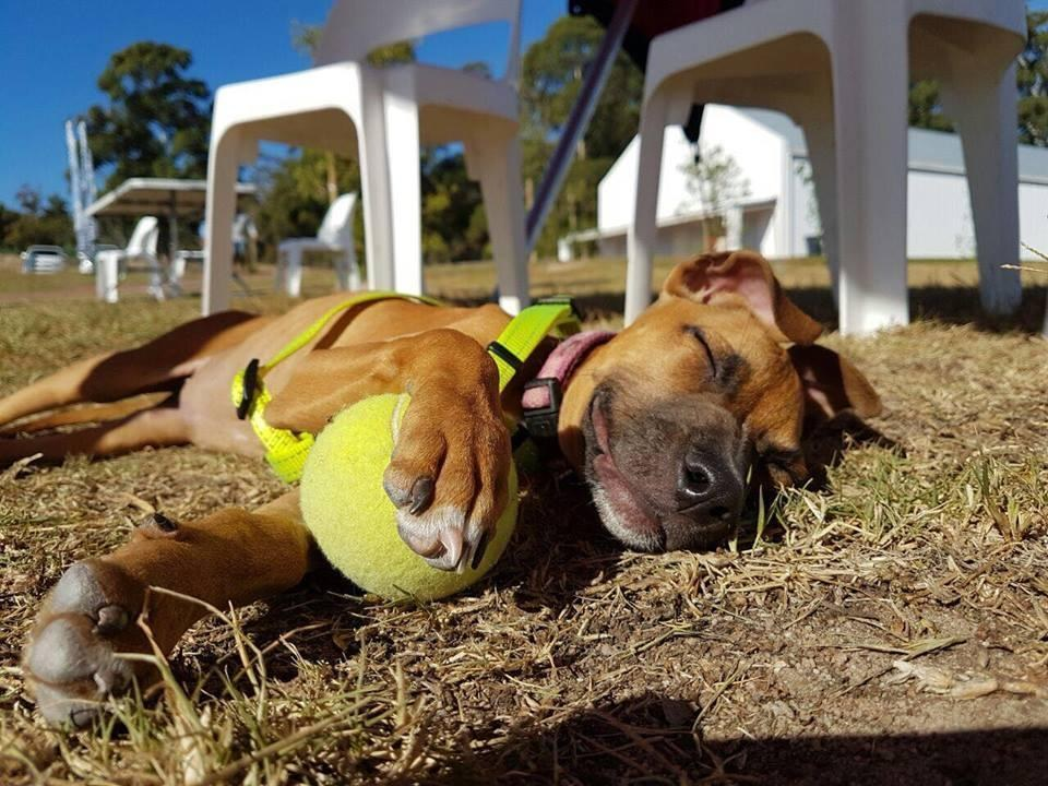 Puppy who is up for adoption enjoying time outside