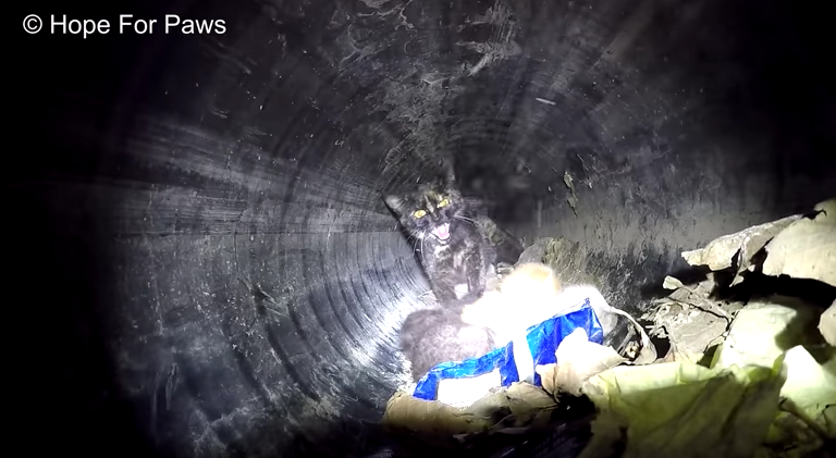 Mother Cat and Kittens Rescued From Drainage Pipe