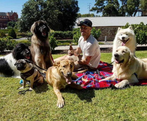 Australian guy wants to rescue all the dogs