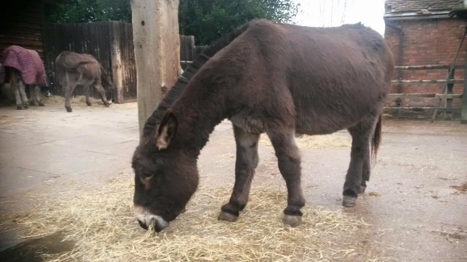 Donkey rescued from neglect at The Donkey Sanctuary in Birmingham