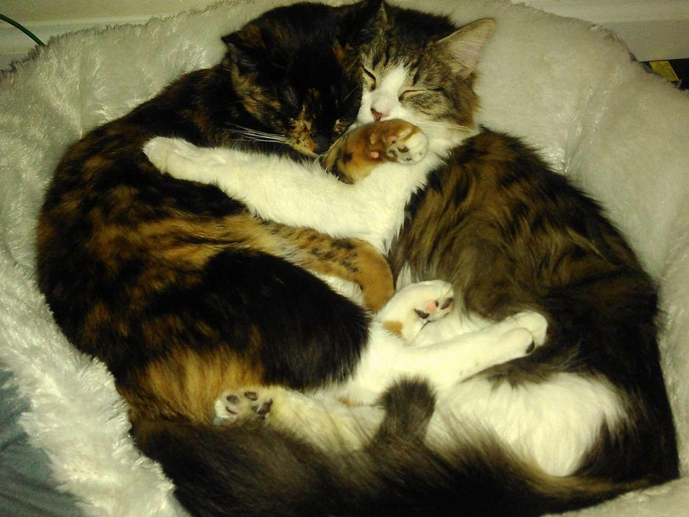 Bonded Cats Never Stop Cuddling At Shelter Two Hours