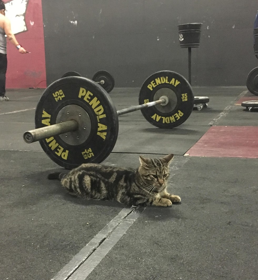stray cat wanders into gym to offer some u0027help u0027 and motivation