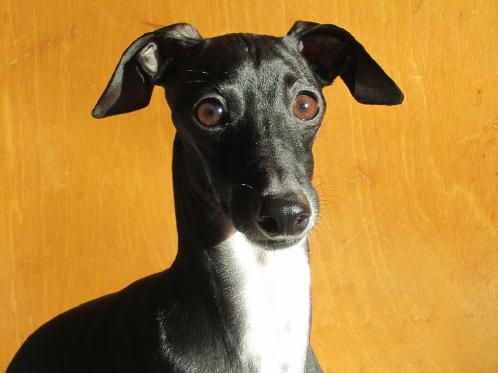 Ero chiusa nel bagno e non potevo muovermi ma proprio quando pensavo di essere davvero nei - Fare il bagno al cane dopo mangiato ...
