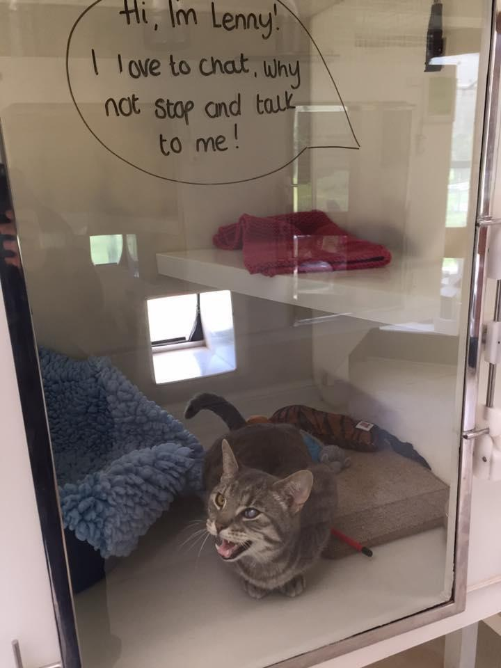 pet can cat
