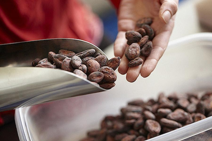 Chocolate-Making Classes