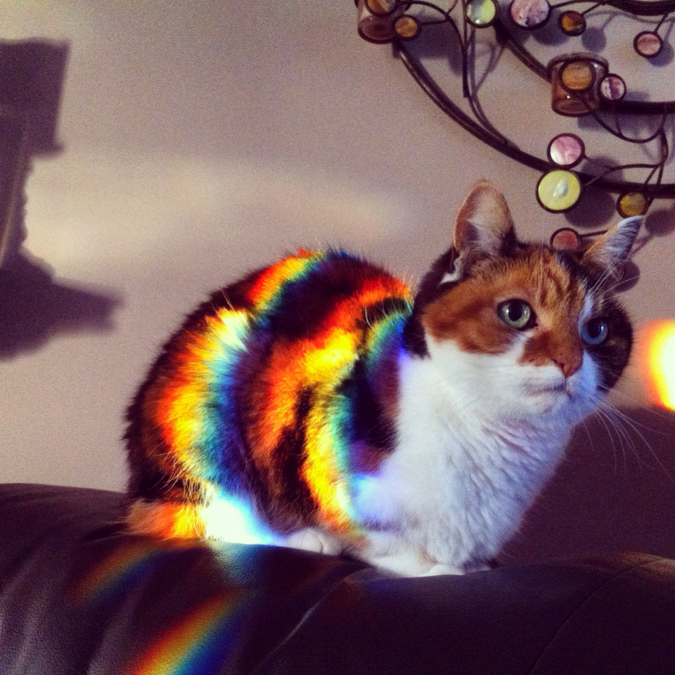 These 10 Cats Catch Rainbows Through Sunbeams Love Meow
