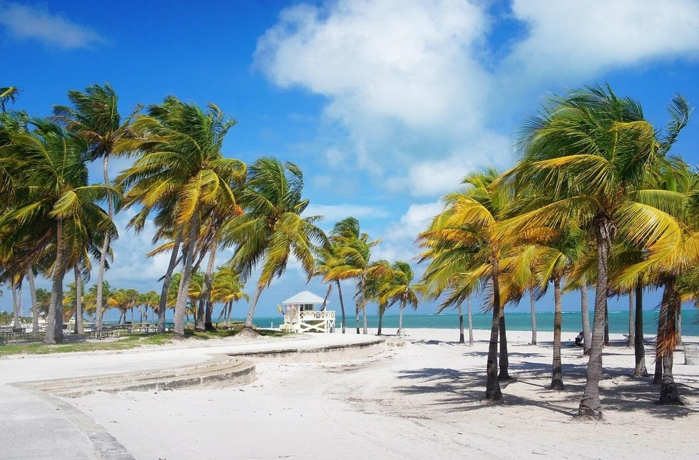 Palm trees on the beach in Key Biscayne, Florida