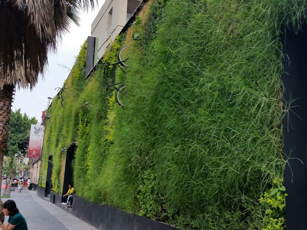 Vertical garden in Mexico City