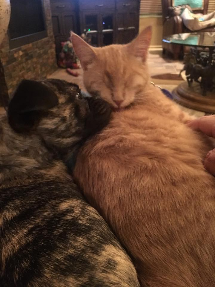 Blind Cat Becomes Guardian Angel To Disabled Dog And Helps