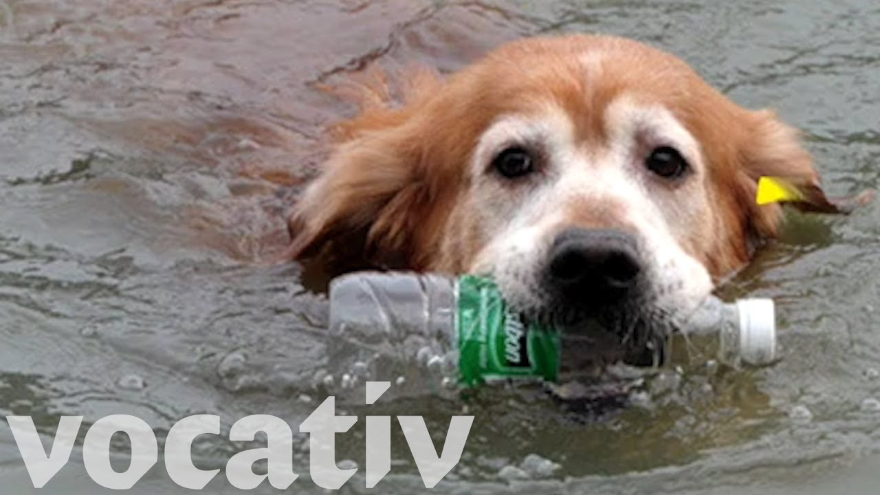 photo image Check Out This Amazing Eco-Pooch Working to Clean Up China's Rivers